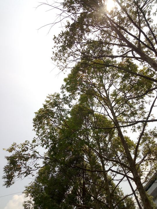 A lot of green trees in a city park - JAVE