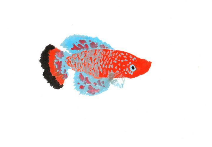 Nothobranchius rachovii killifish - JAVE