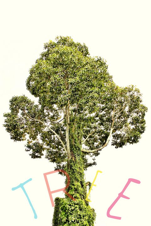 Tree with moss and white background - JAVE