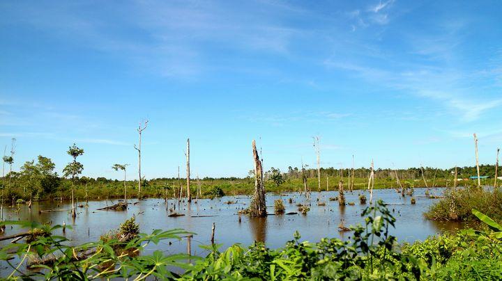 swampy mess - JAVE