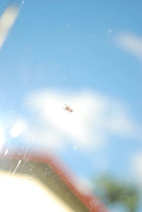 Bugs on the windshield - JAVE