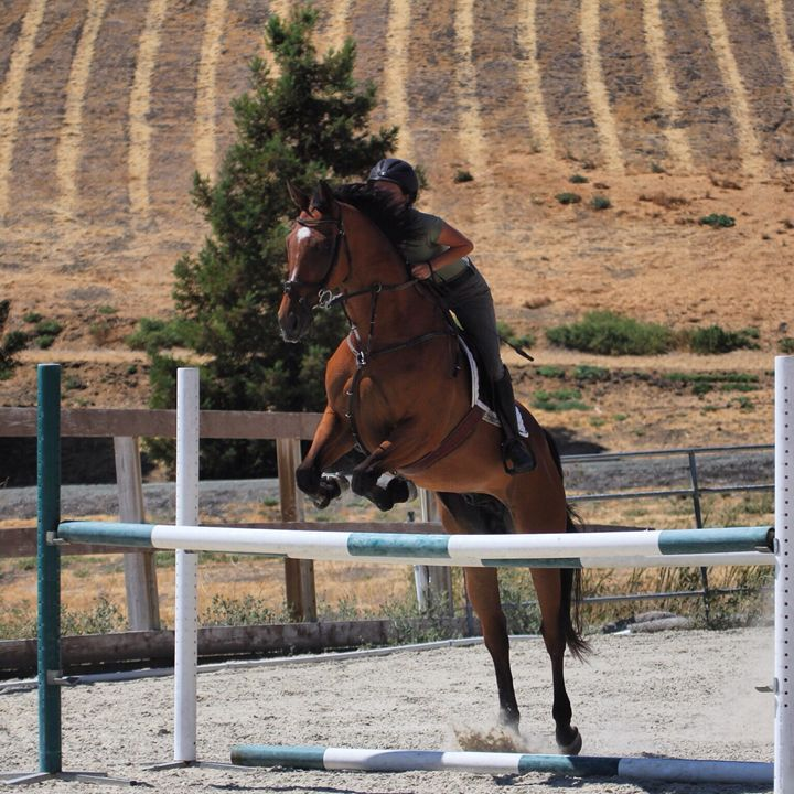 Jumping Practice - KSB Photography