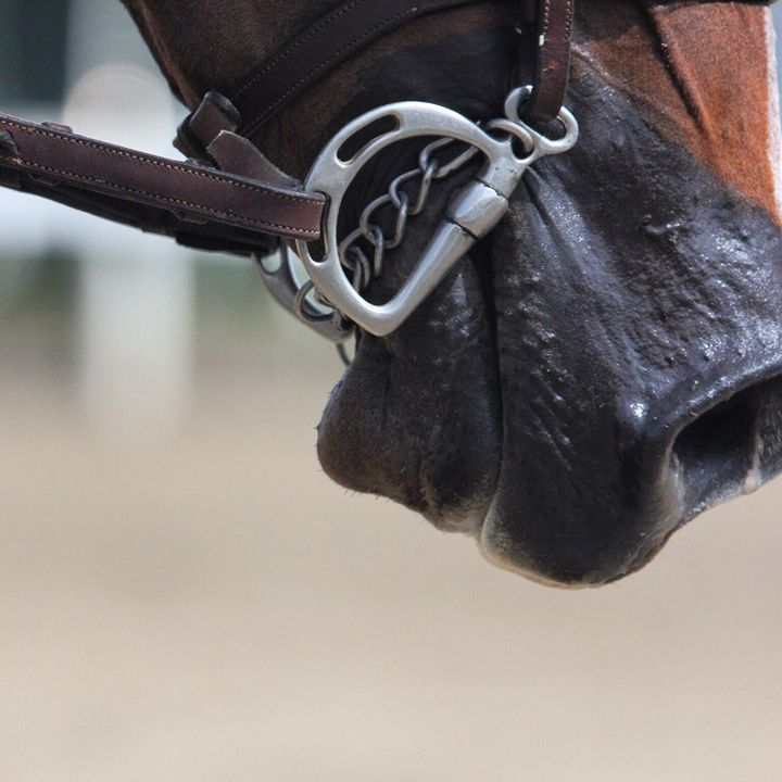 Show Horse Muzzle - KSB Photography