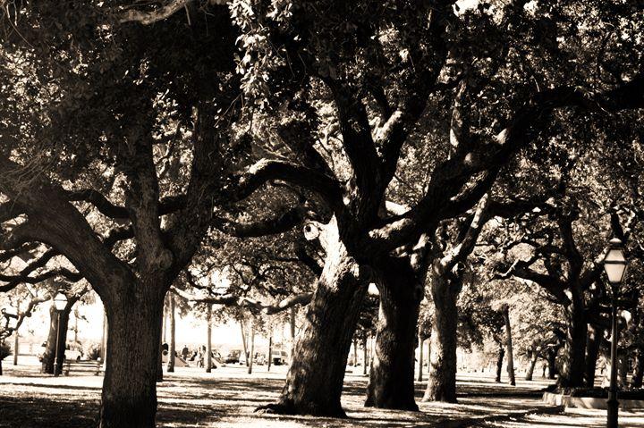 Charleston Shade - Raye of Light