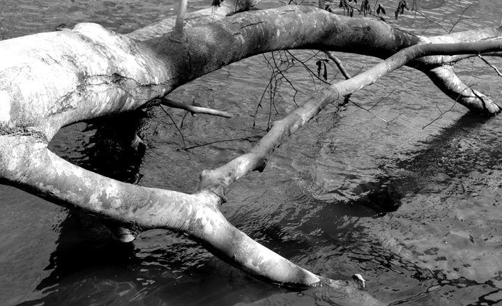 Tree in Water - Raye of Light