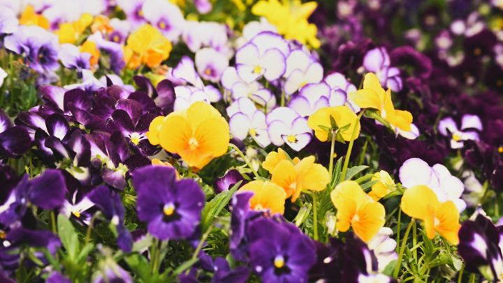 Field of Flowers - Raye of Light