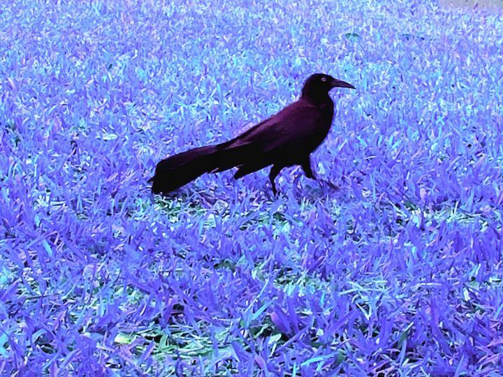 True colors of a raven - Ricardo E. Delvalle