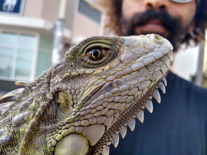 Iguana - Ricardo E. Delvalle