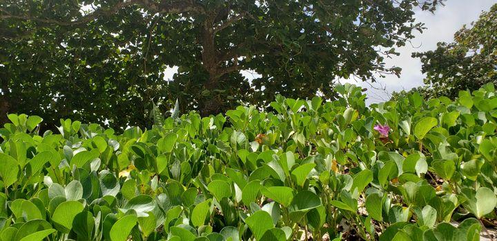 Nature's shades of green - Ricardo E. Delvalle