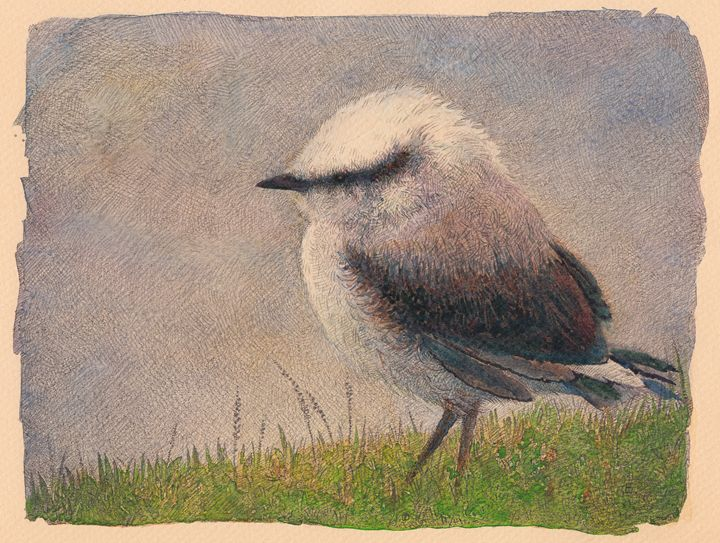 Nuthatch - Irshi watercolors
