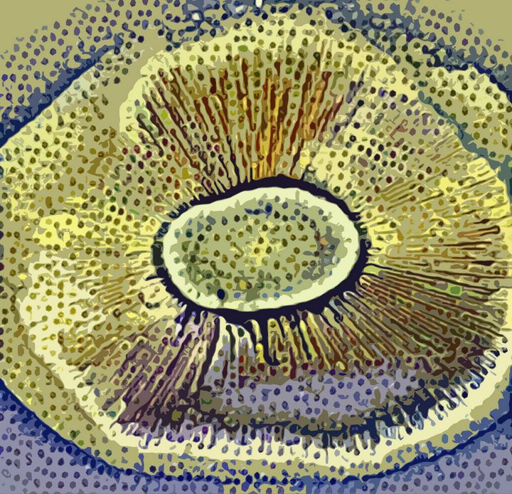 Portobello mushroom v1 - Mr.eye