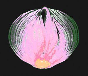 Onion v1 - Mr.eye