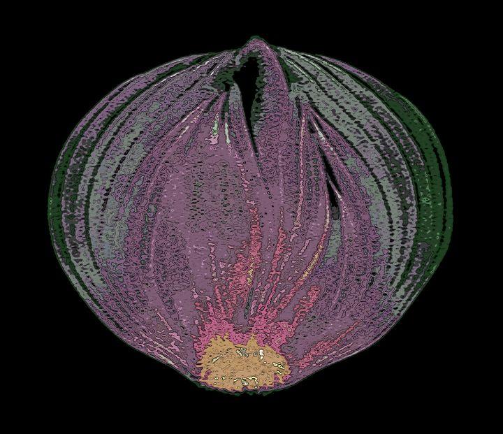 Onion v2 - Mr.eye