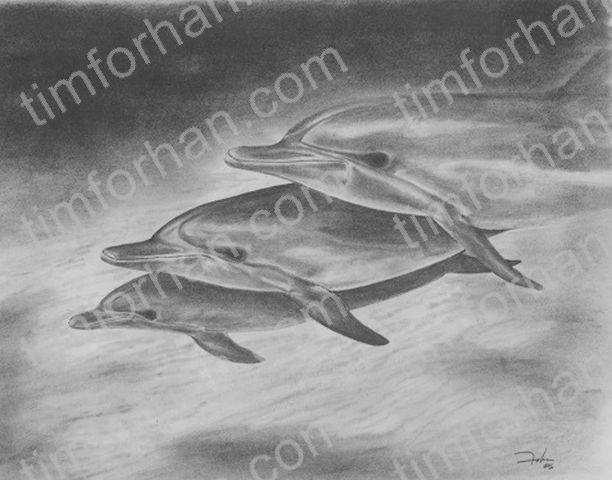 Three Dolphin - Tim Forhan Art Gallery