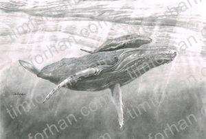 Humpback Calf Whale