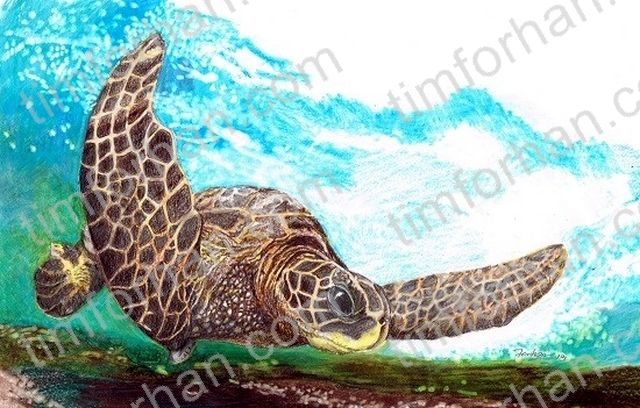 Sea Turtle - Tim Forhan Art Gallery