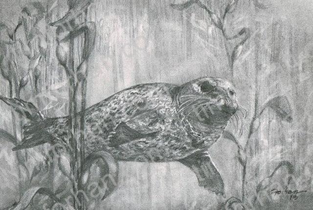Harbor Seal - Tim Forhan Art Gallery