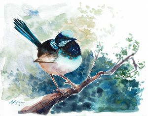 Fairy Wren - Suzys Art