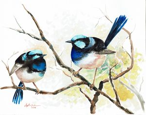 Two Fairy Wrens - Suzys Art