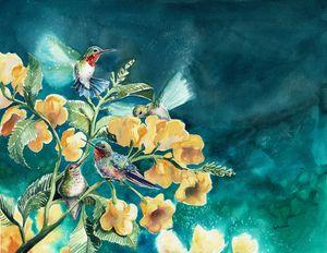 Hummingbird Gathering