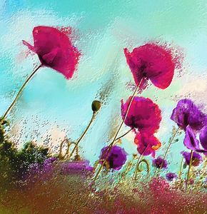 Fushia poppies