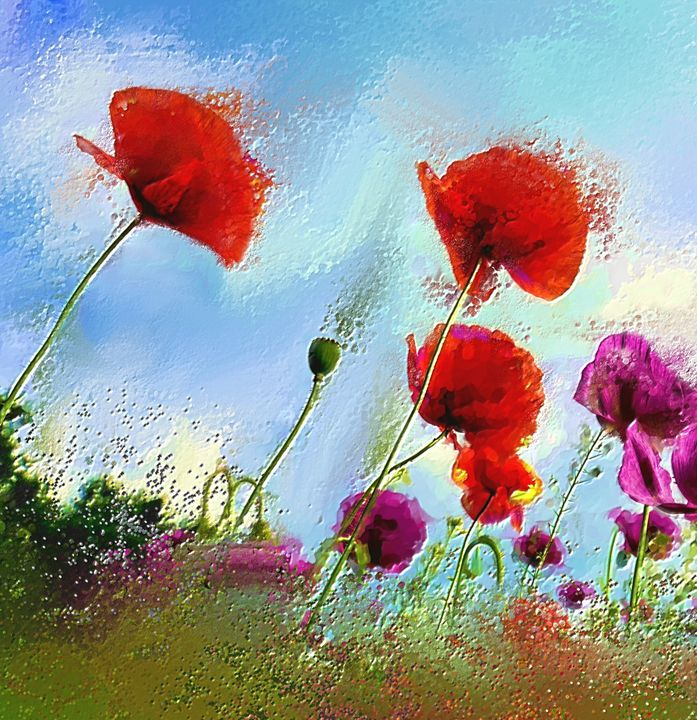 Red poppies - Arthur Design and Co.