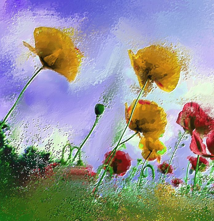 Yellow poppies - Arthur Design and Co.