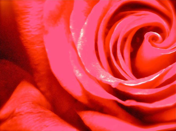 THE REDDEST ROSE - Tirzah Fujii