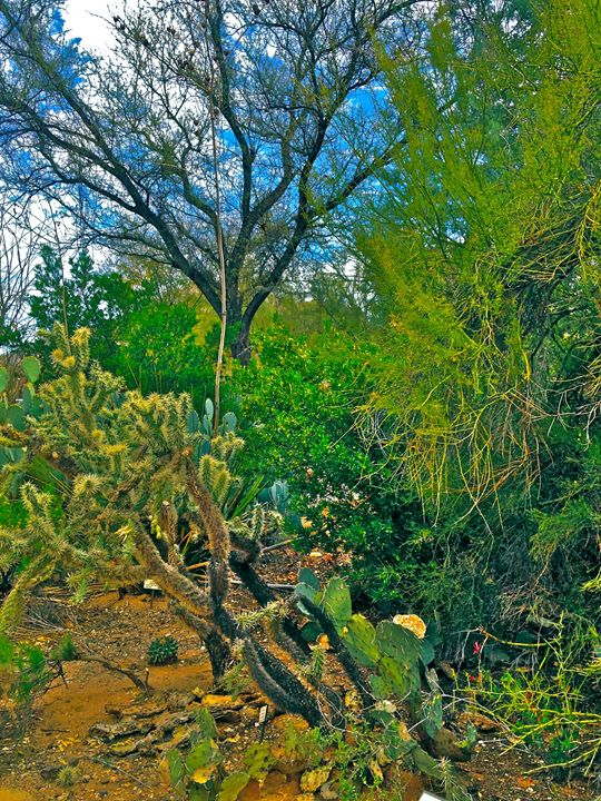 BRILLIANT BLUE SKY AND DESERT GREEN - Tirzah Fujii