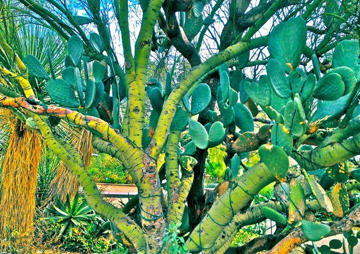 COLORFUL CACTI TREE - Tirzah Fujii