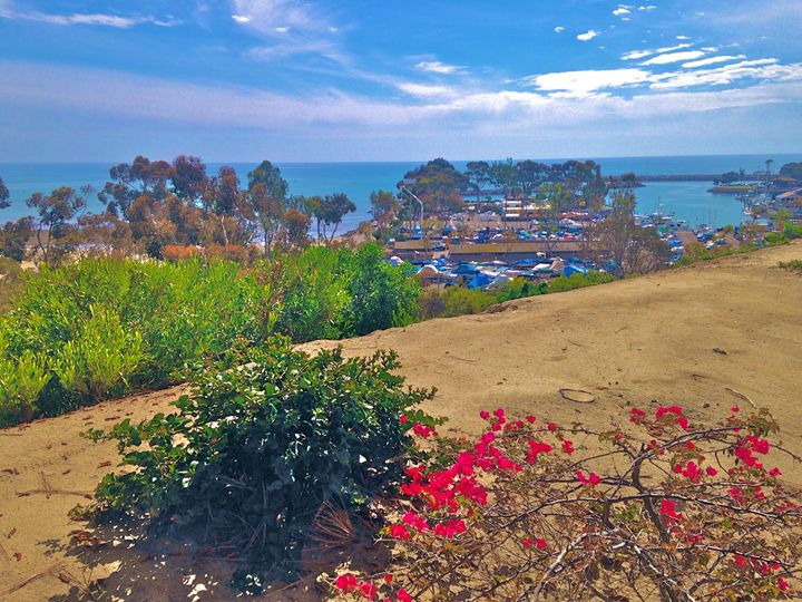 DANA POINT HARBOR PARK VIEW - Tirzah Fujii