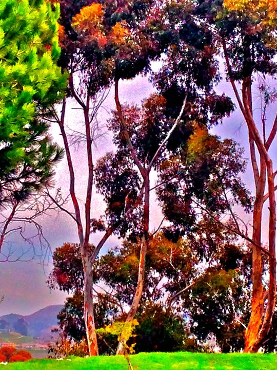 TREES AND VIEW GOLDEN LANTERN ST. - Tirzah Fujii