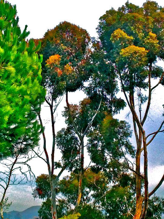 BEAUTIFUL TREES - Tirzah Fujii