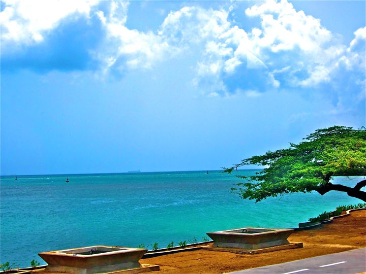 ARUBA OCEAN, TREE, CAUSEWAY BEAUTY - Tirzah Fujii