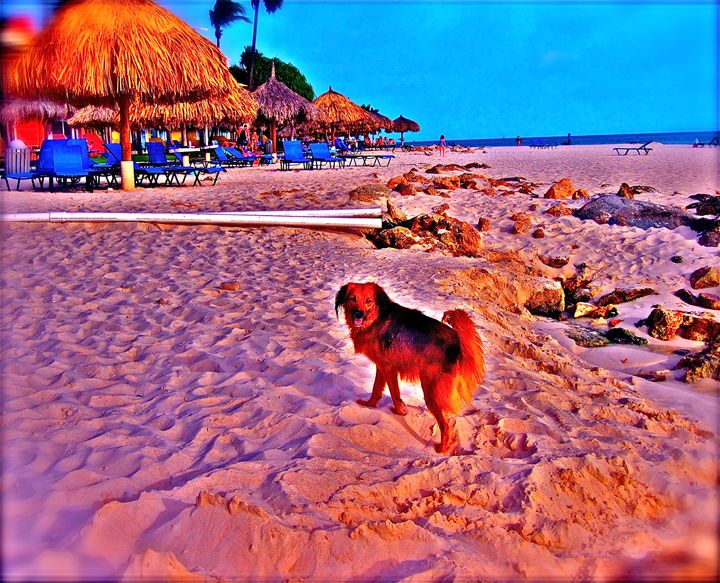 HAPPINESS IS A PUPPY ON THE BEACH - Tirzah Fujii