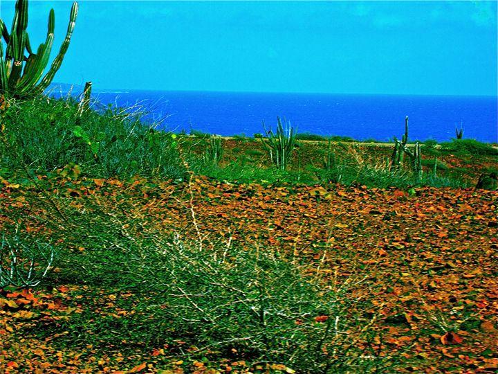 VIBRANT ARUBA OCEAN DESERT BEAUTY - Tirzah Fujii