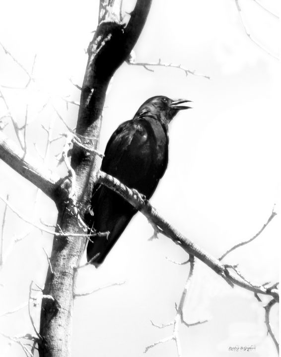 Mother Crow - Restless D Graphics