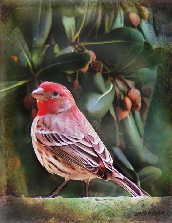 Little Bird IV - Restless D Graphics
