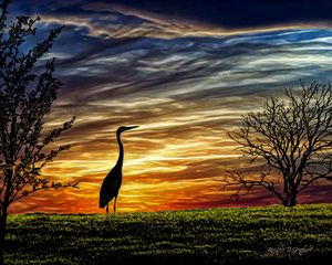 Heron on the Hill