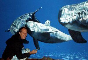"Dolphin Family ""the Mermaid Project"""