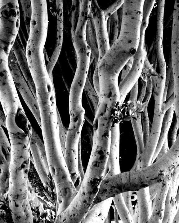 Lombard Labyrinth - J Meier Photo