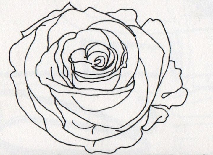white rose - 1derrful art