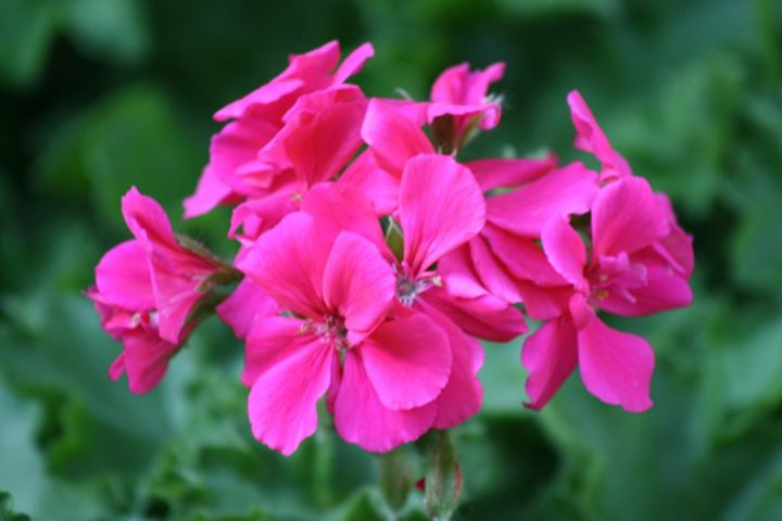 Vibrant Pink Flowers - PRINTS365