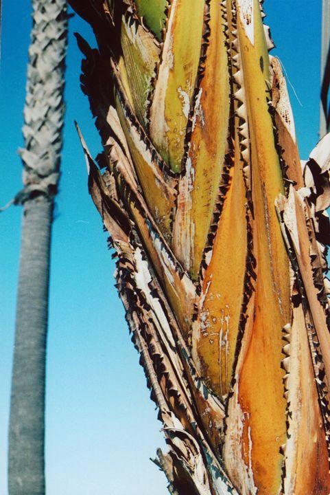 A Palm Tree - Yao Li
