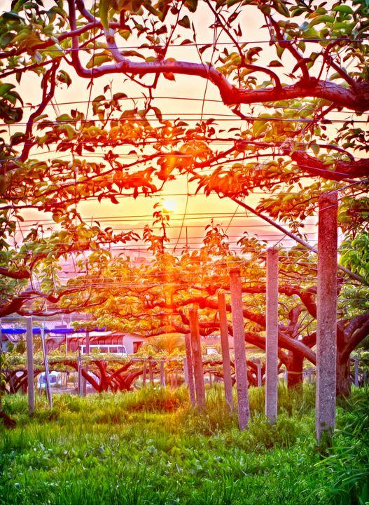 The Sunset Vineyard - Hanabi
