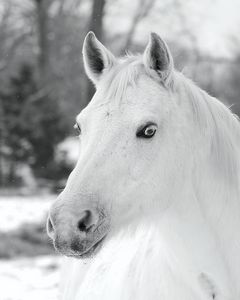 Merl The Mare
