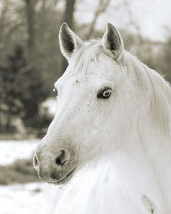 Merl the Mare (Sepia)