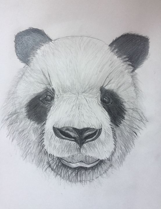 Panda - Pencil & Paper