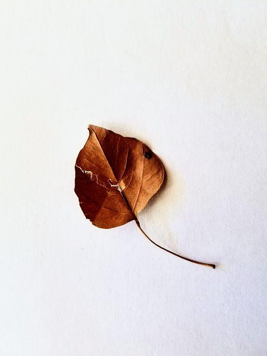 Cracked - Lesa Nivens