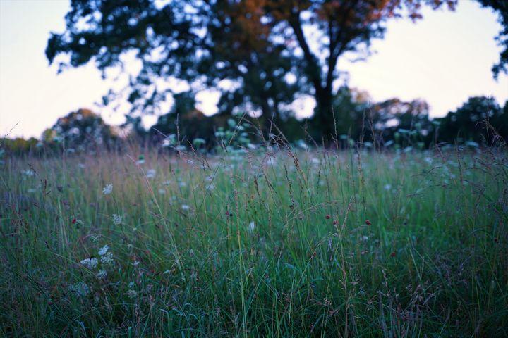Beautifully Overgrown - Lesa Nivens